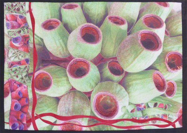 Gargantuan Gumnuts by Lynette Weeks